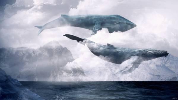 летающие киты фото
